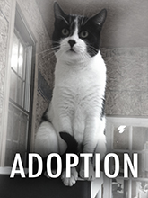 Adopt from Haven of the Heart